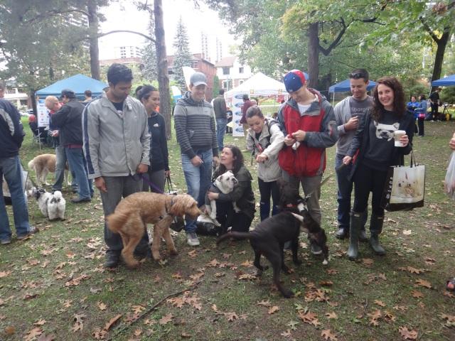 Mustard Bark for Life Canadian Cancer Society Toronto High Park