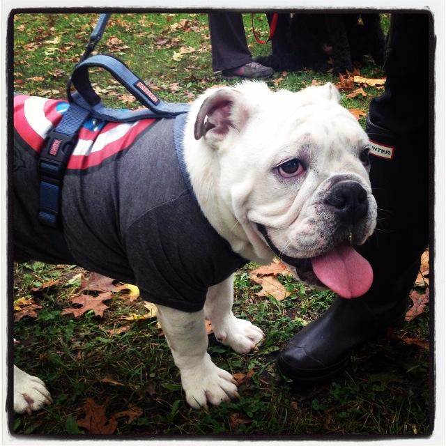 High Park Mustard Bark for Life Canadian Cancer Society